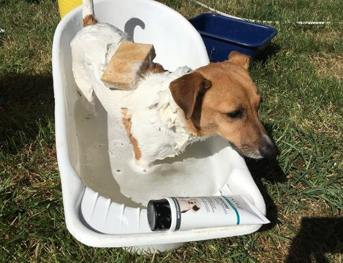 Bathing Your Pet in Summer