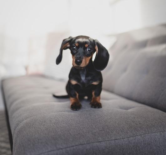 templestowe vet dog pic
